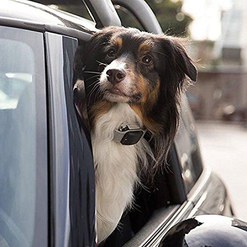 Tagg GPS plus pet tracker 6